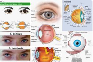 neurodidactica funcion visual neurodidactic