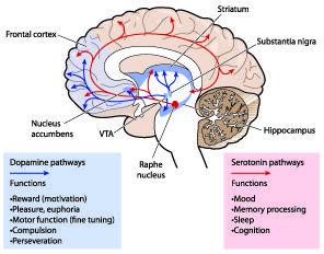 circuito dopamina y serotonina